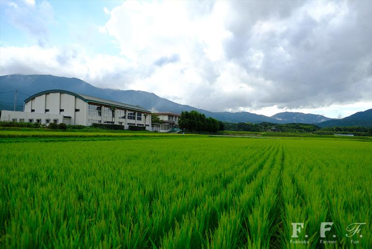 夏の水田と脇山小学校