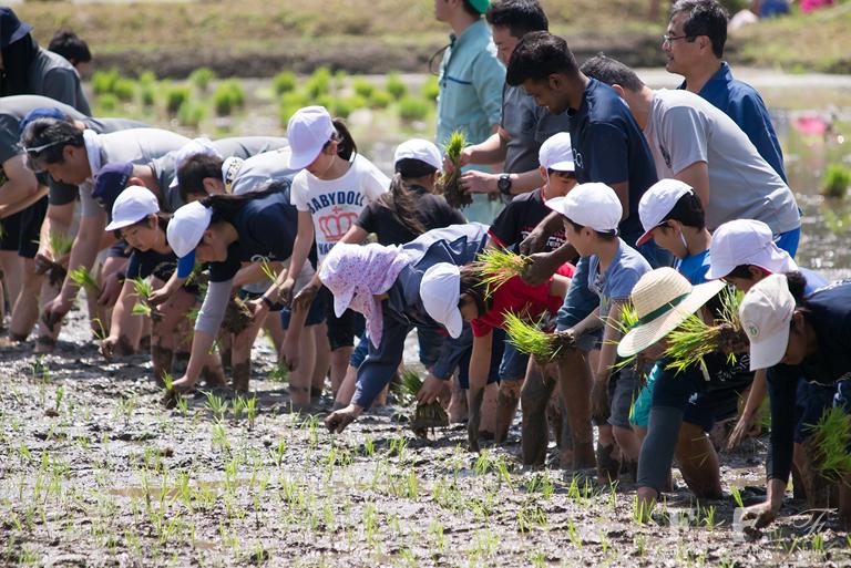 小学生と地元の住民の方による田植え