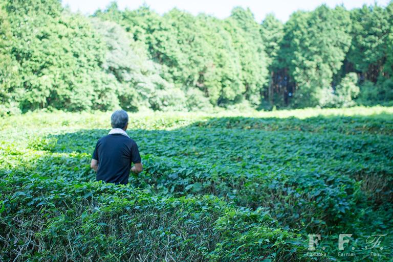 脇山の茶畑
