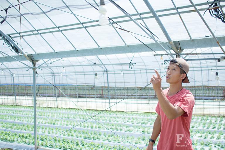 写真:北崎地区の花ハウスと袈裟丸さん