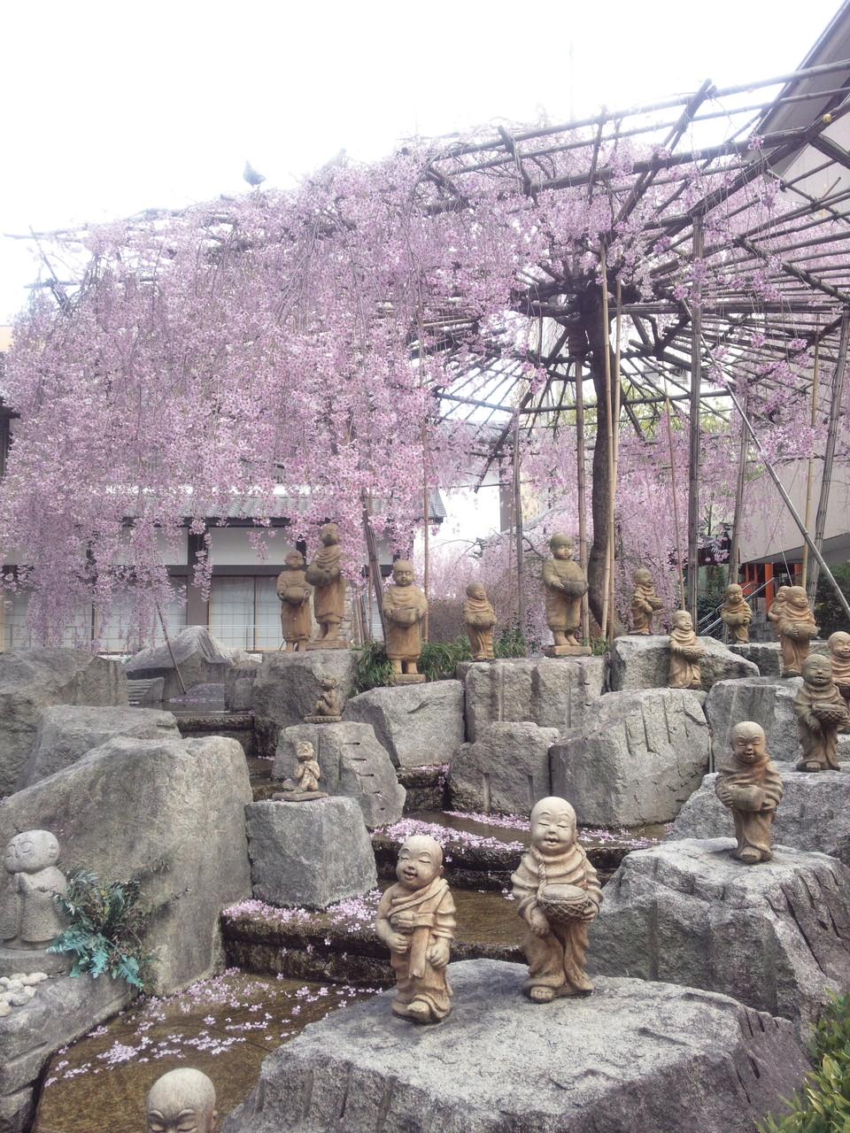 4月六角堂の桜