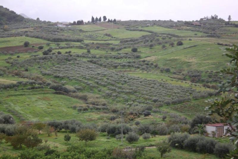 Le Jardin de Sicile - Plantation
