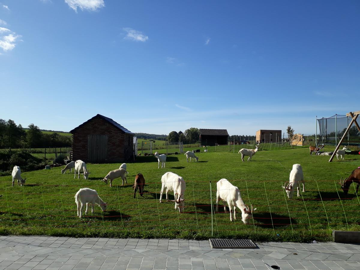L'Artis'Ane et Compagnie - Fromages de chèvre