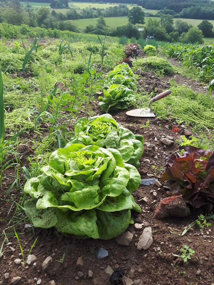Au Vert'denne - Légumes bio