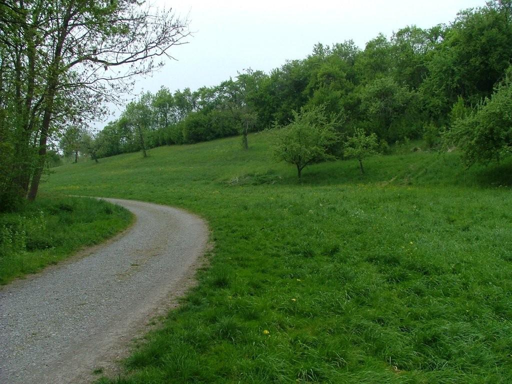 Der Weg führt an schönen Wiesen entlang.
