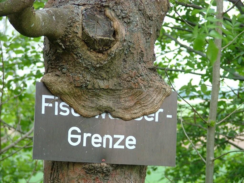 Ein Baum erobert ein Schild.