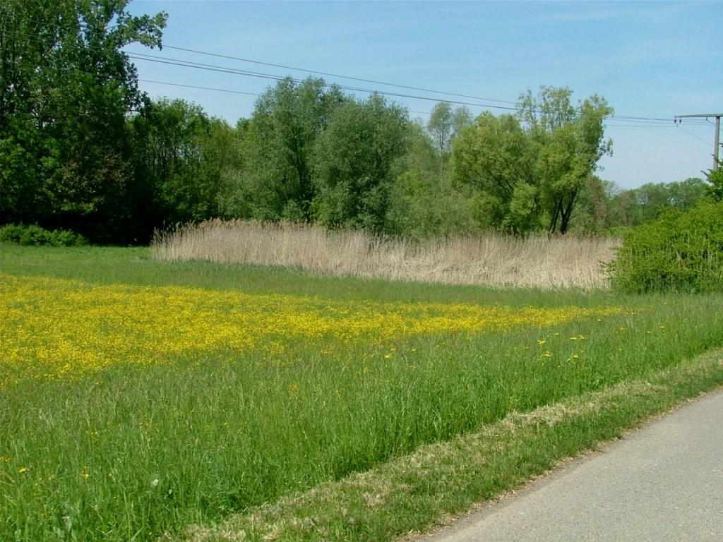 An der Bottwar entlang führt der Weg an einigen Schilfbeständen vorbei.