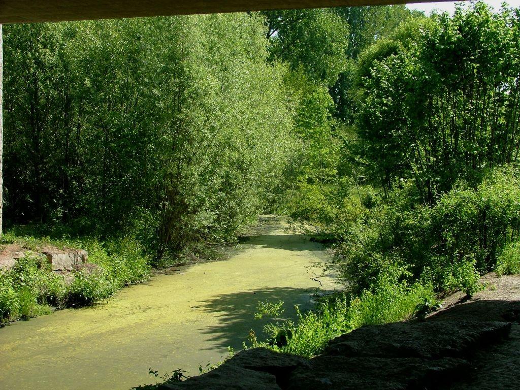 Nun geht es immer an der Enz entlang Richtung Bietigheim. Zu sehen ist hier ein Feuchtbiotop unter einer Brücke.