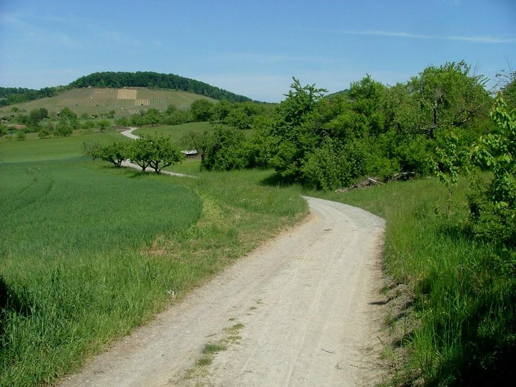 An den Streuobstwiesen vorbei geht es weiter mit Blick auf den Forstberg, den wir später noch umfahren werden.
