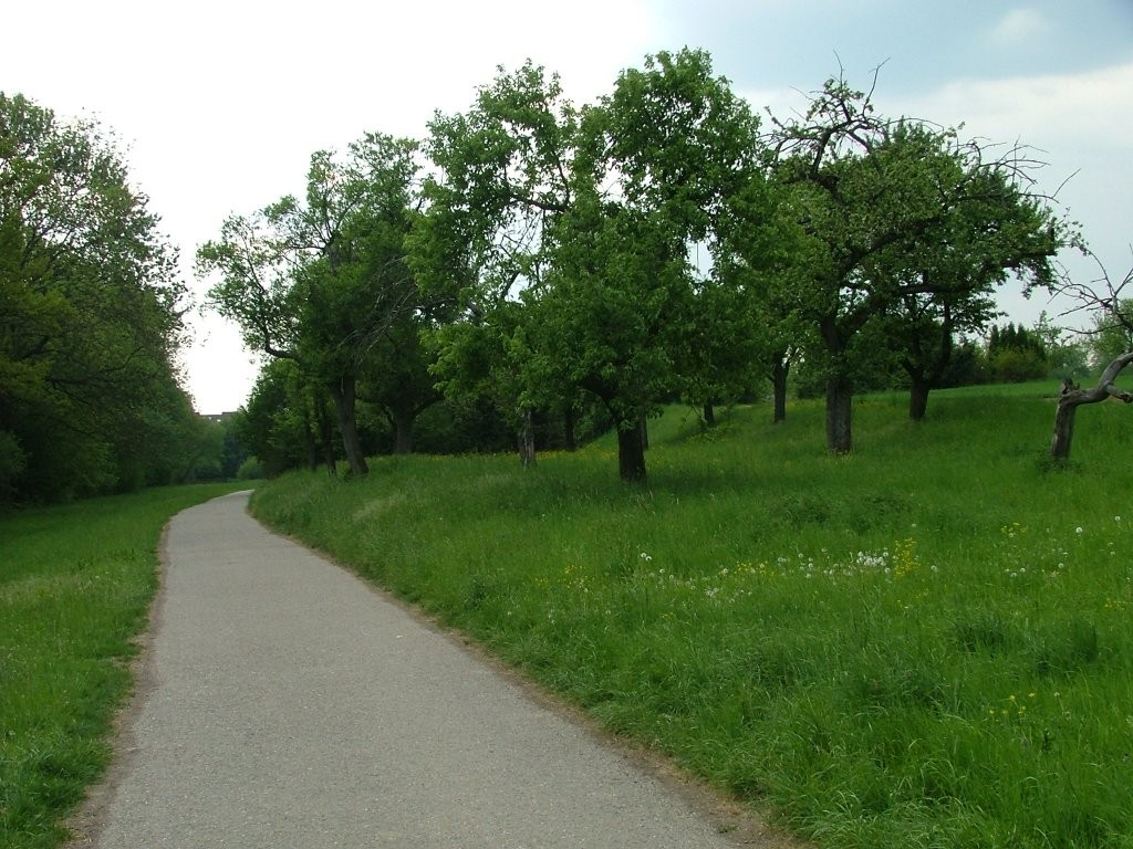 Jetzt beginnt das größte zusammenhängende Streuobstgebiet auf der Möglinger Gemarkung, den Sichelberg und Bühl.