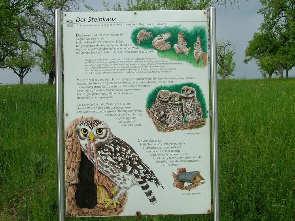 Mehrer Schautafeln bieten Informationen über Streuobstwiesen hin. Hier über den Steinkauz.