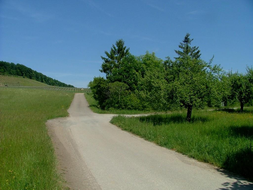Noch vor den Weinbergen biegen Sie rechts ab.