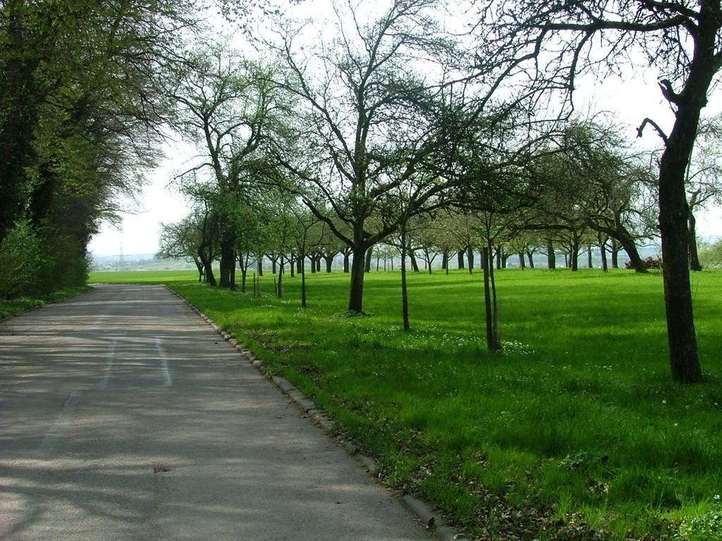 Über den mittleren Lembergweg es weiter zu den Lemberghöfen.