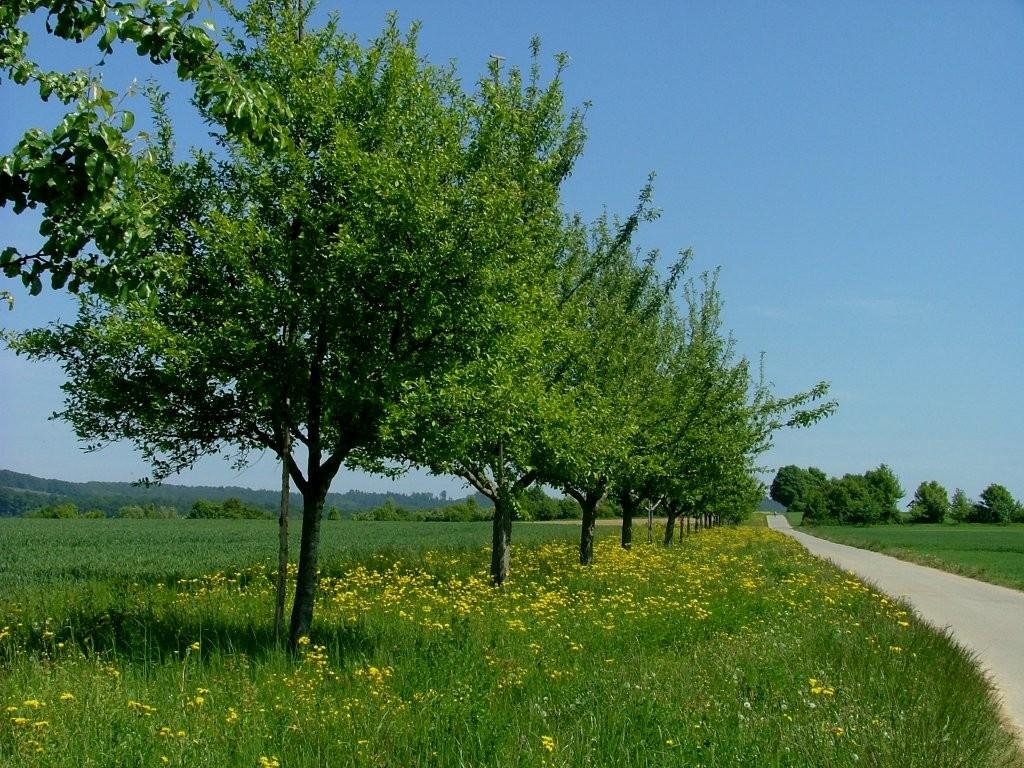 Hunderte Obstbäume wurde vor einigen Jahren gepflanzt ...