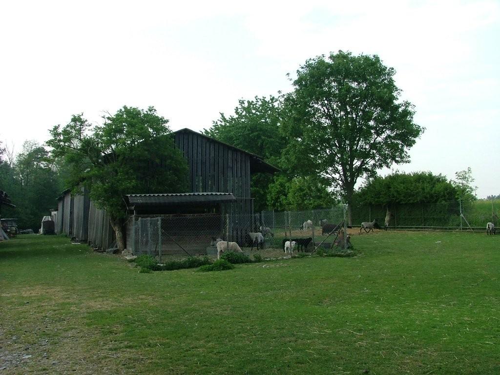 Nun kommen Sie zur Schafweide mit einer Hütte. Die Wege rechts oder links vorbei führen kurz danach wieder zusammen.