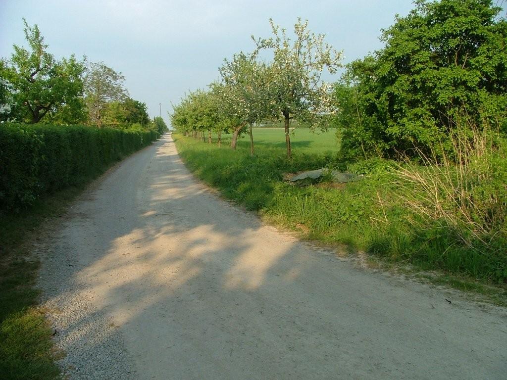 Biegen Sie nach rechts in diesen Weg und am Ende wieder nach links.
