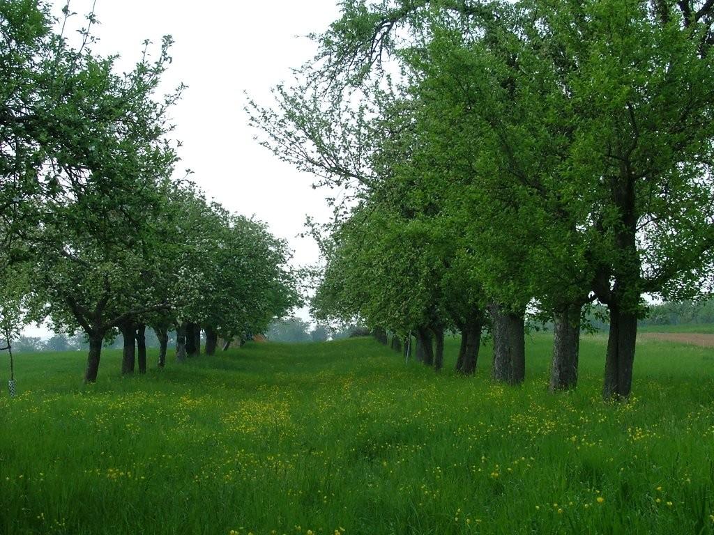 Lange Baumreihen sind zu sehen.
