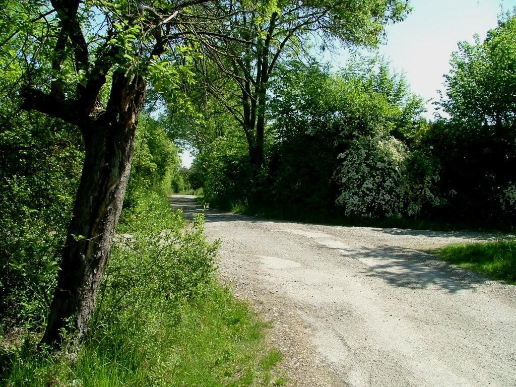 Nun kommen Sie in ein sehr schönen Streuobstgebiet am Altenberg (Südhanglage)