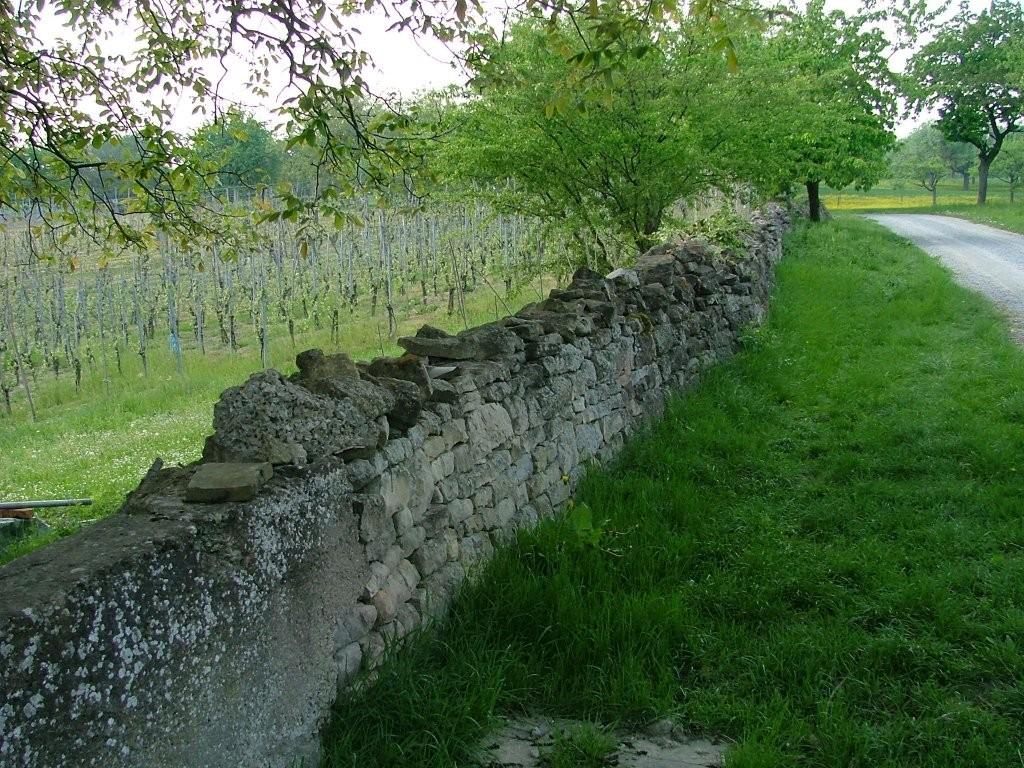 Hier dient eine alte Natursteinmauer als Abgrenzung zu den Weinbergen.