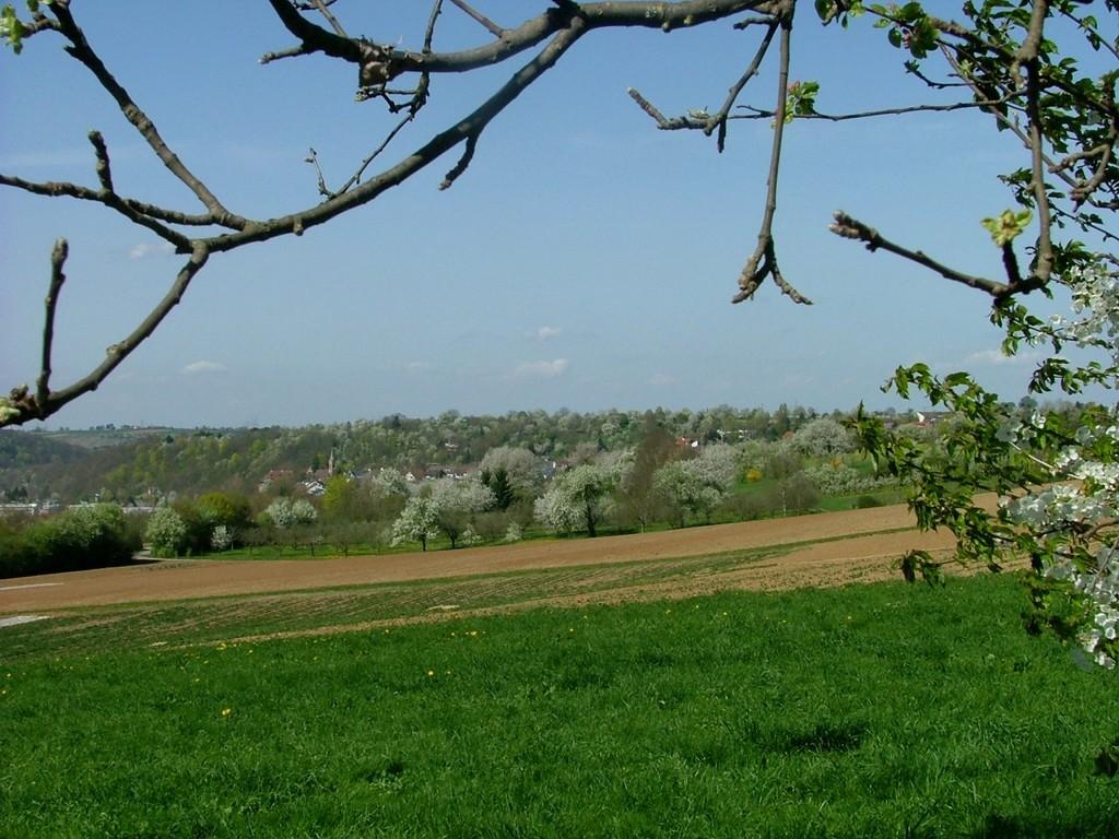Nochmal ein Blick auf die Streuobstwiesen vor Hochberg.
