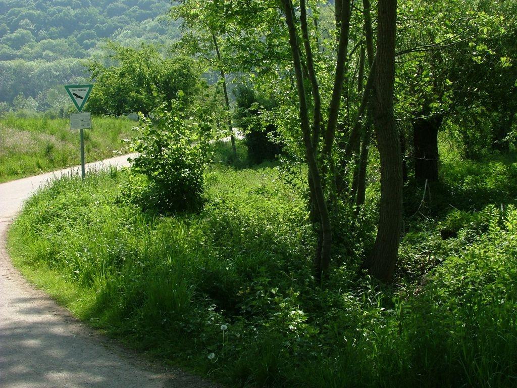 Über eine kleine Brücke geht es am Naturschutzgebiet vorbei.