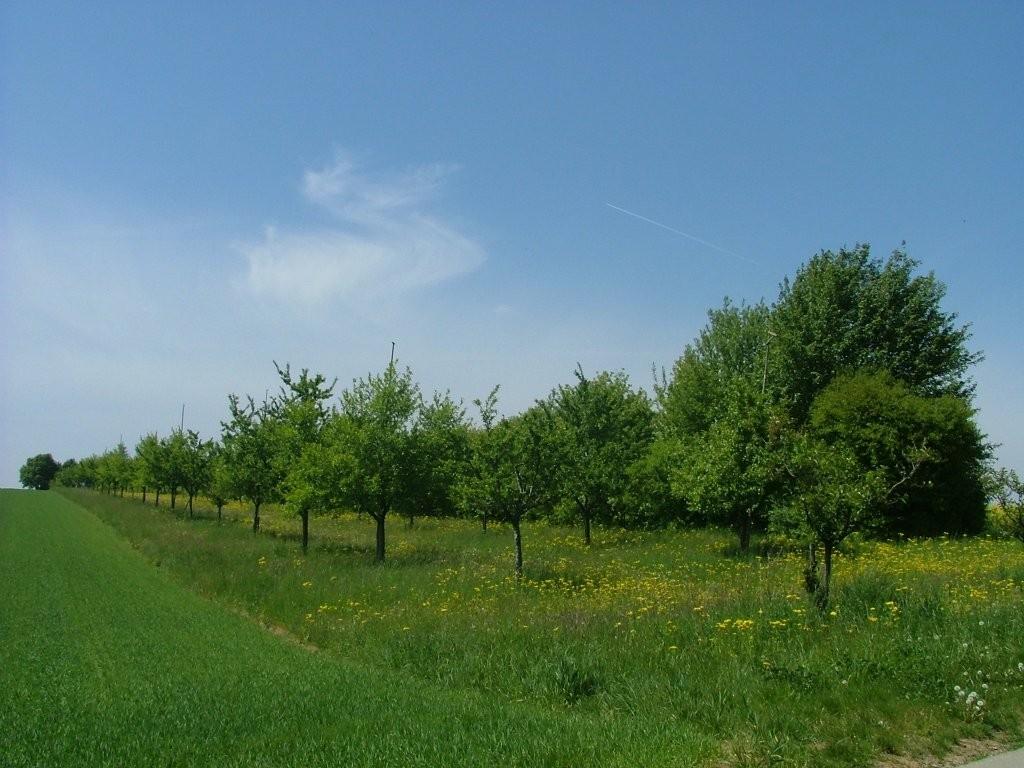 ... sowie auch lange Hecken, fast bis zum Forsthof.