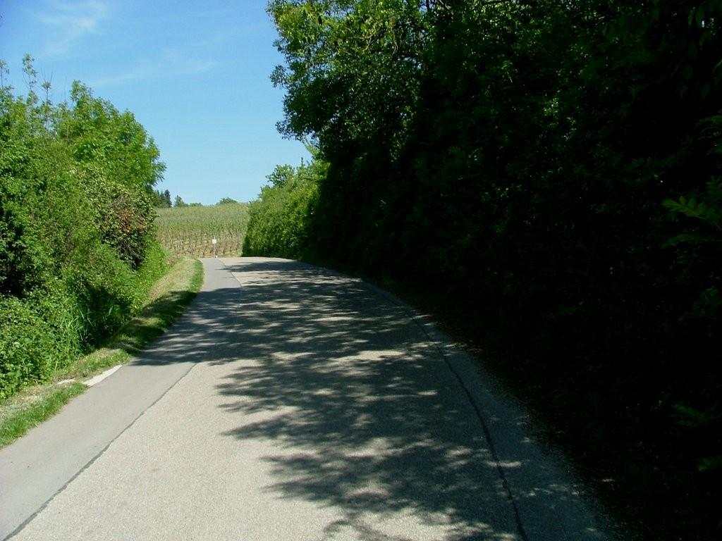 Am Ortsausgang geht es links den Berg hinauf. Vor den Weinbergen dann recht abbiegen.