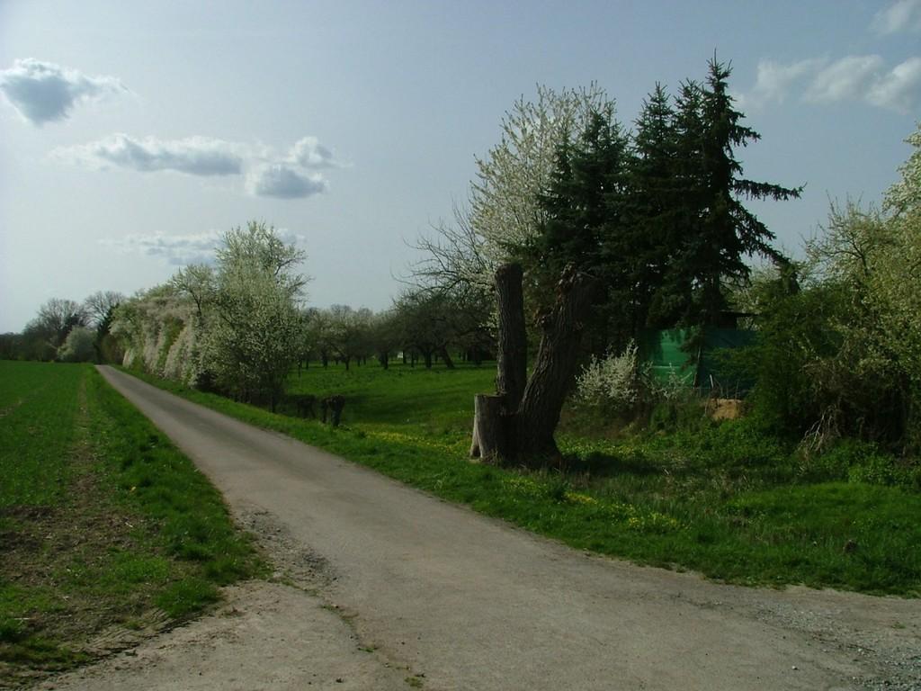 Und wieder geht es an einem schönen Streuobstgebiet vorbei.