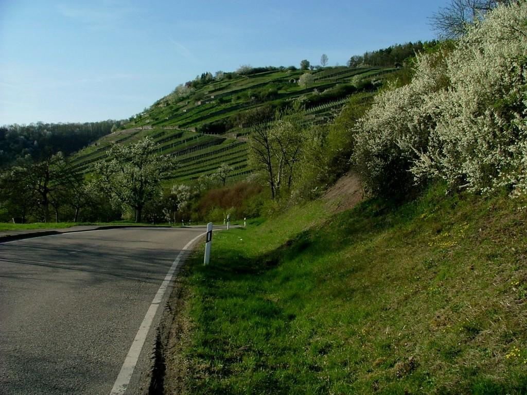 Geigersberg in Ochsenbach