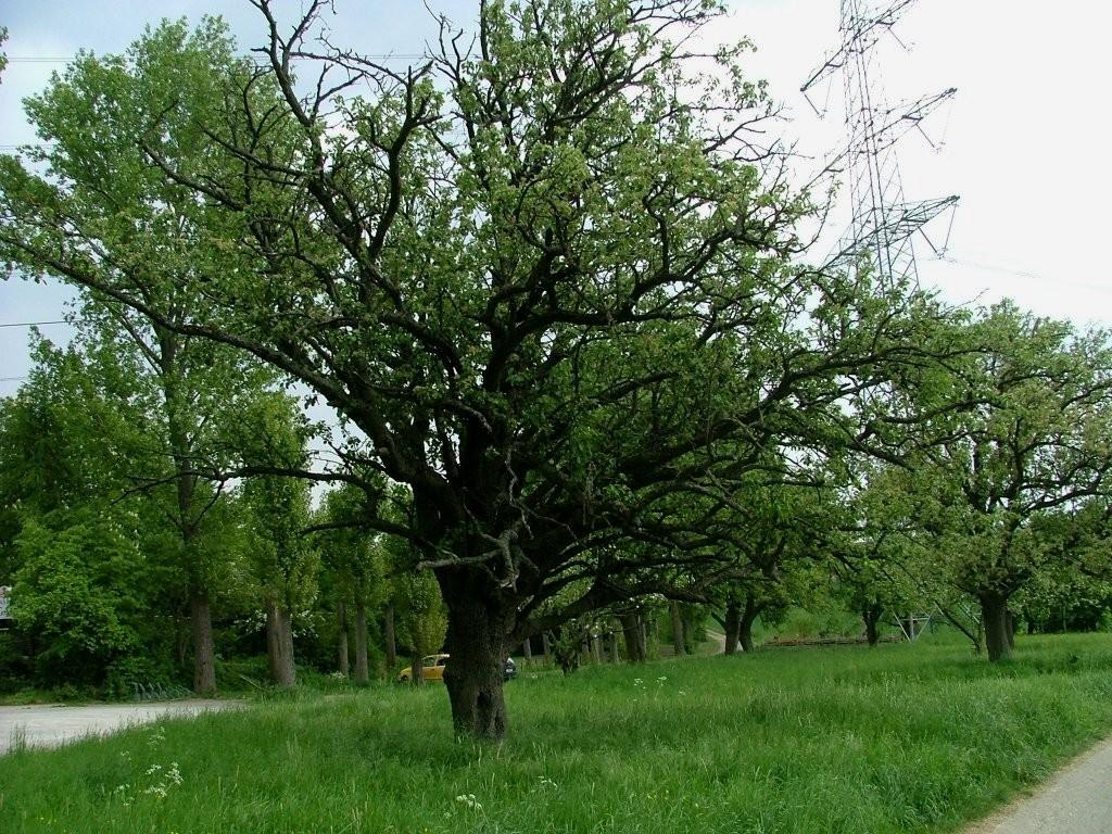 Ein schöner alter Apfelbaum ist hier auch zu sehen.