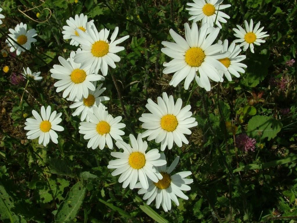 Nöch ein letzter Blick auf die schönen Blüten, dann geht es weiter den Schildern nach den Forstberg hinauf.