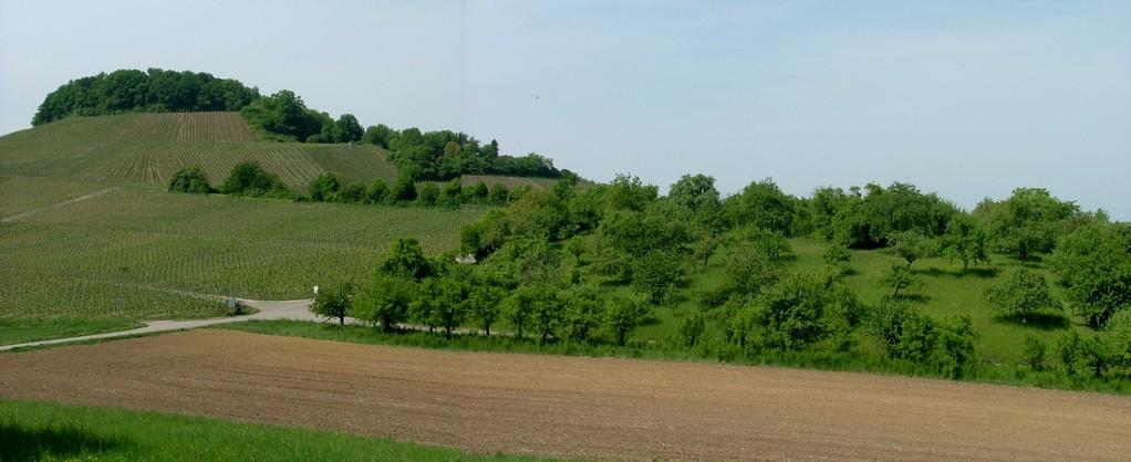 Fahren Sie den Weg weiter mit Blick auf Streuobstwiesen am Forstberg.