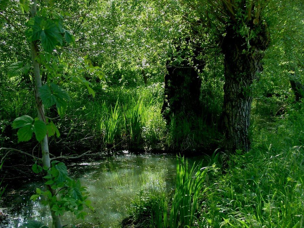 ... und auf der linken Seite ein stehendes Gewässer mit vielen Kopfweiden.
