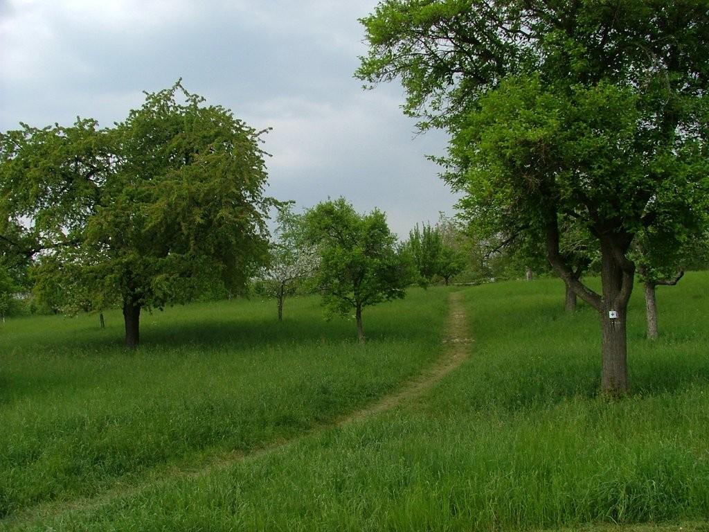 Ein Fußpfad bietet auch für Wander einen schönen Zugang in das Streuobstgebiet.