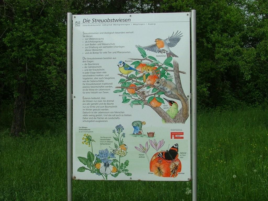 Informationen über Tiere und Pflanzen im Lebensraum Streuobstwiesen.