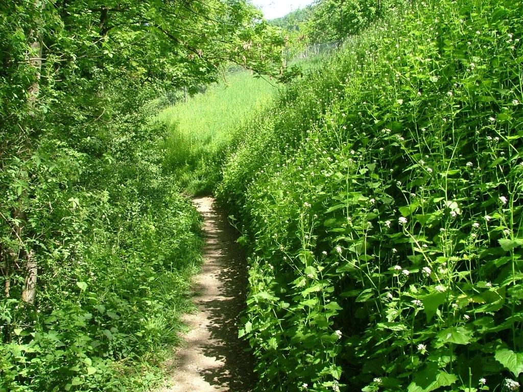 Einige hundert Meter geht es auf einem schmalen Pfad Richtung Oberstenfeld. Es empfiehlt sich hier zu gehen, da Absturzgefahr in den Bach droht.