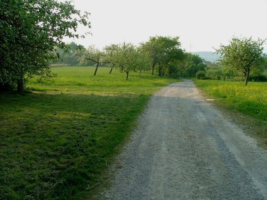 Dieser Weg führt nun hinunter zur Landstraße. Vorsicht! Am Ende geht es noch ziemlich steil bergab.