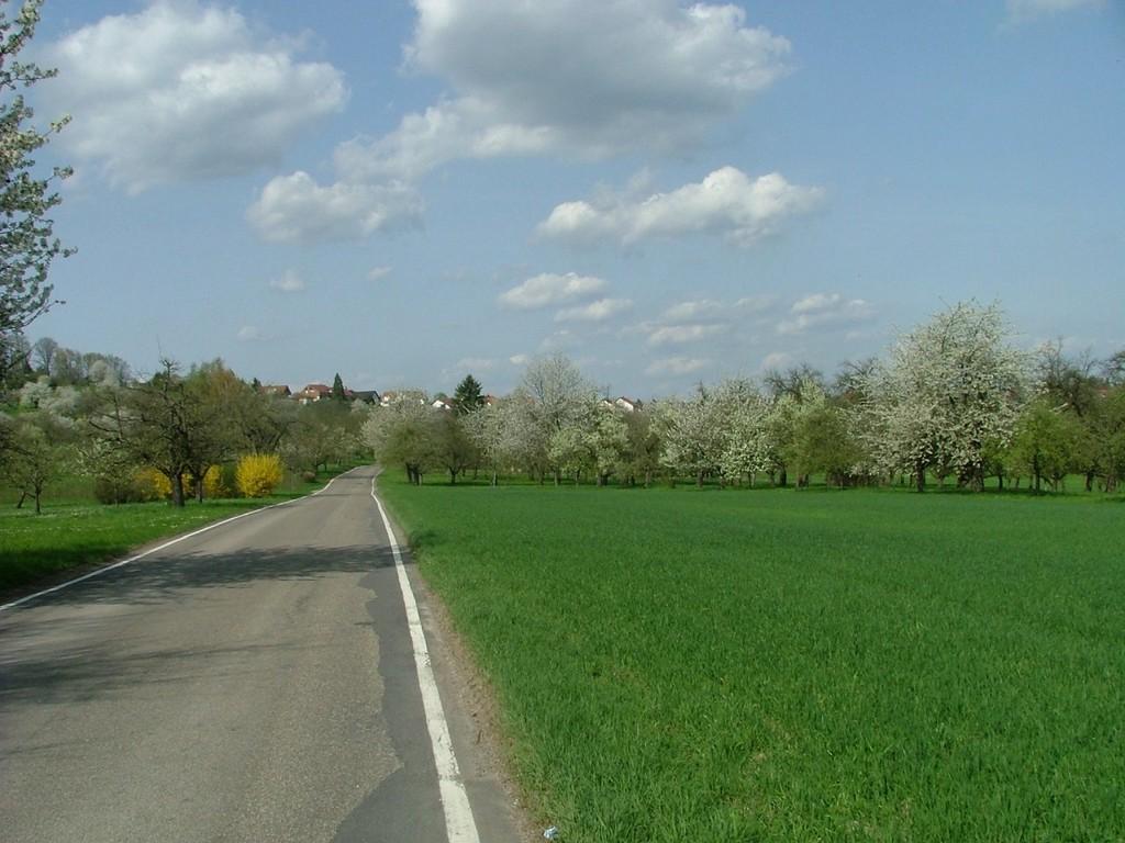 Ein Stück entlang der Landstraße nach Affalterbach.