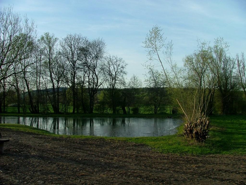 Teich in Sersheim