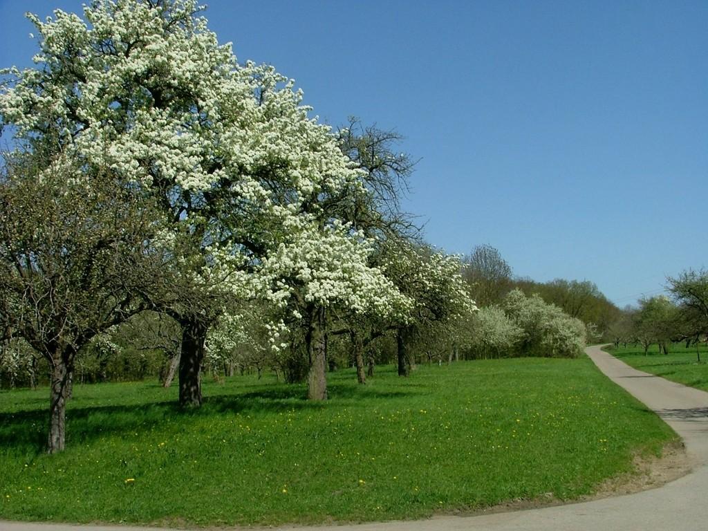 Viele schöne Bäume in voller Blüte