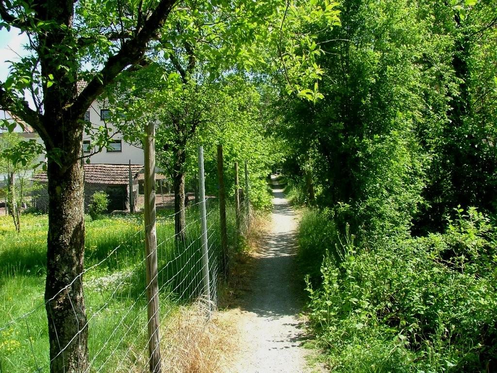 Dieser führt Sie zwischen einem kleinen Bach und einer Weide hindurch zur Uferstraße, an der Sie links abbiegen.