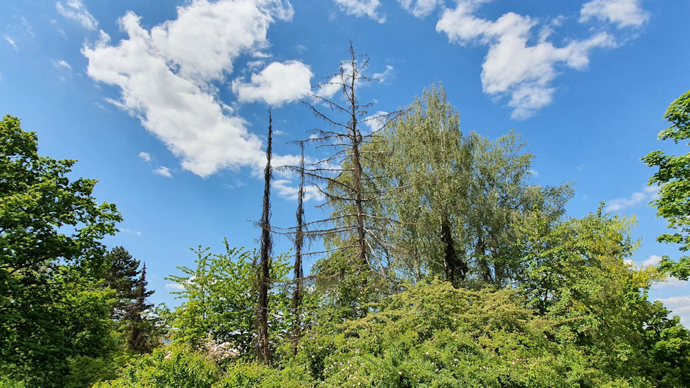 Baumsterben im Landkreis Ludwigburg hat begonnen