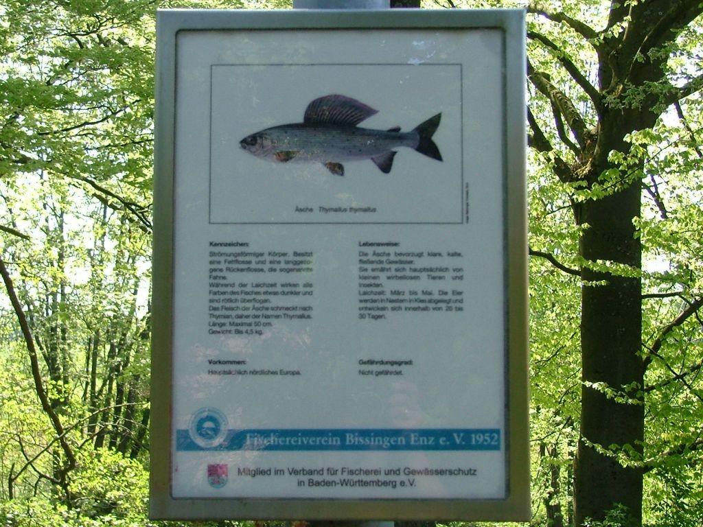 Entlang des Dammes gibt es einen Fisch-Lehrpfad.