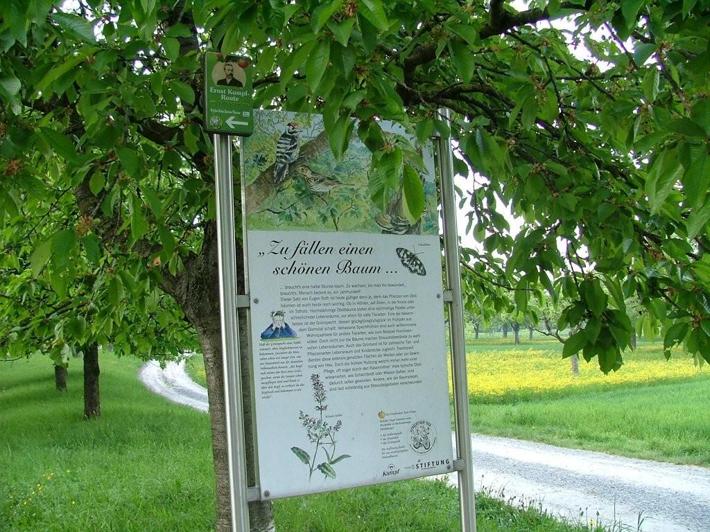 An einer Abzweigung steht unter einem Kirschbaum eine Infotafel, auf der die Schutzwürdigkeit der Obstbäume erläutert wird. Daran befestigt auch der Wegweiser zur Kumpf Route.
