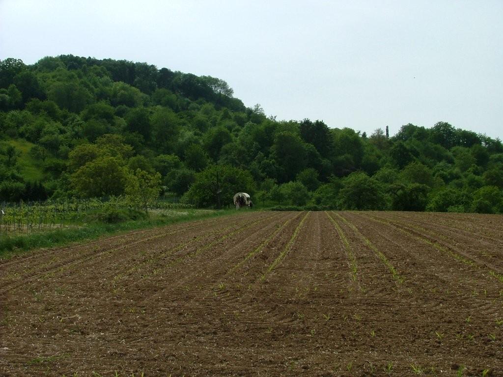 Wer den Weg gnaz hinauf scheut, biegt unterhalb der Waldkuppe links ab und erreicht den Landesradweg, an dem es rechts an der Nordseite des Forstberges vorbei geht. Hier ein Blick zurück auf den Forstberg.