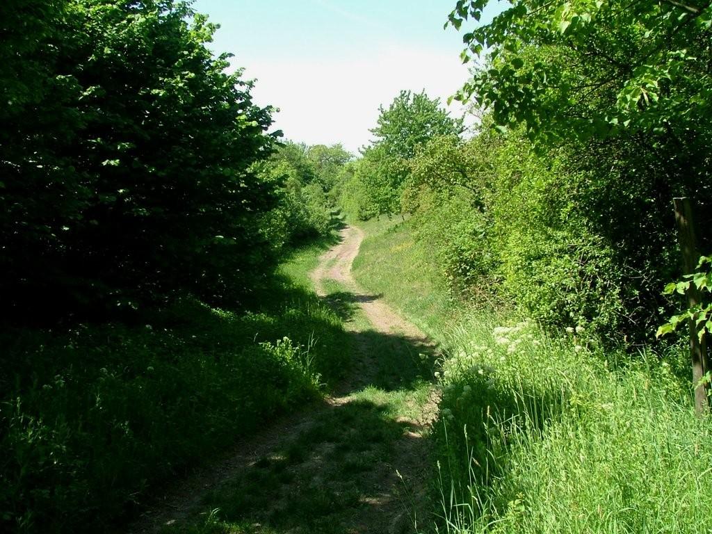 Der mit Hecken bewachsene Hohlweg führt teilweise bergab. Vorsicht!
