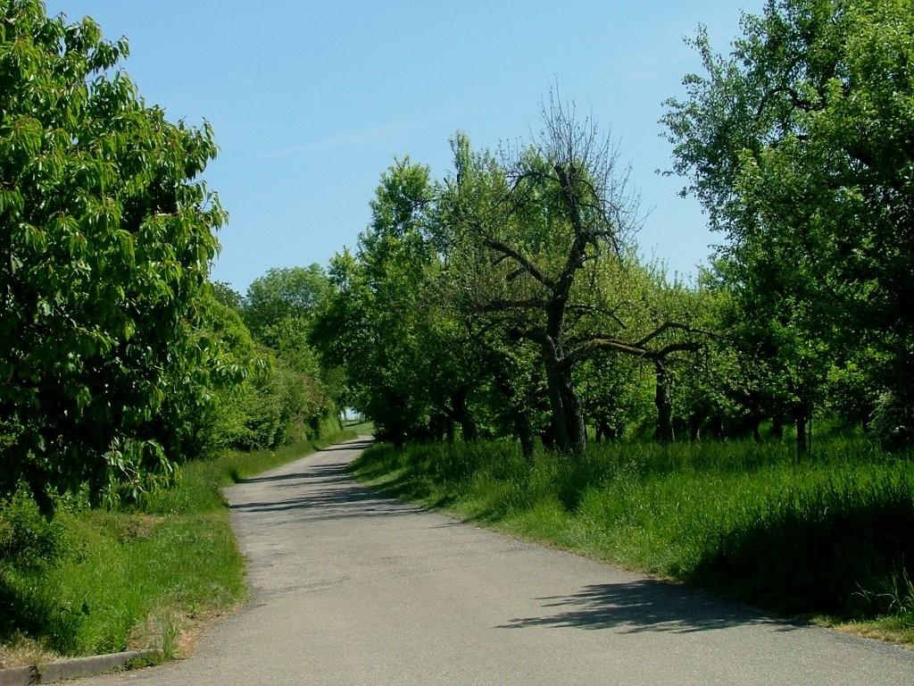Dieser Weg führt Sie bis zum Forsthof.