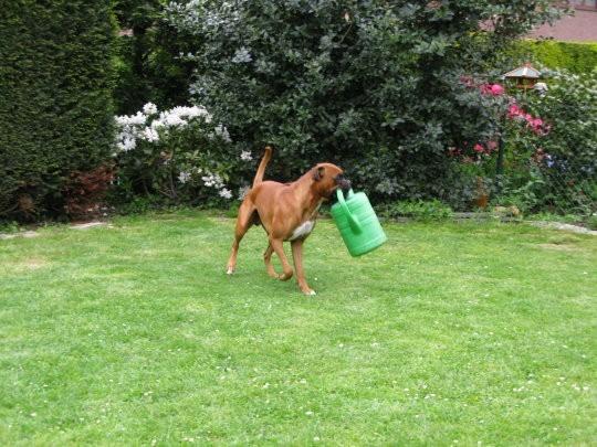 Barbossa bei der Gartenarbeit
