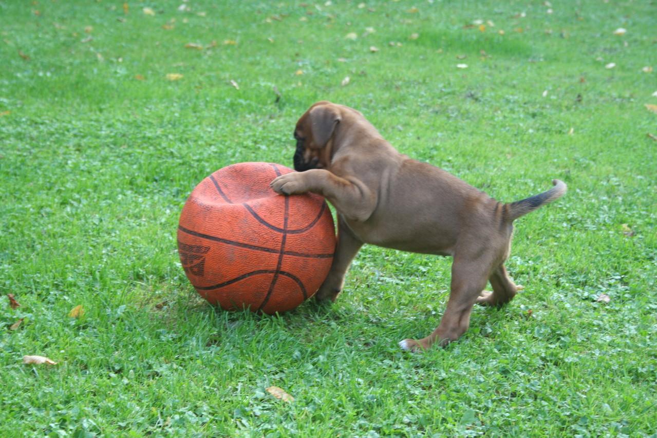 """das """"Ball - Gen"""" haben sie alle!"""