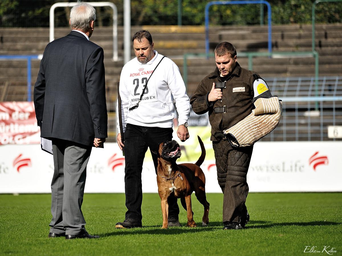 Herbert und Candor - Deutsche Meisterschaft